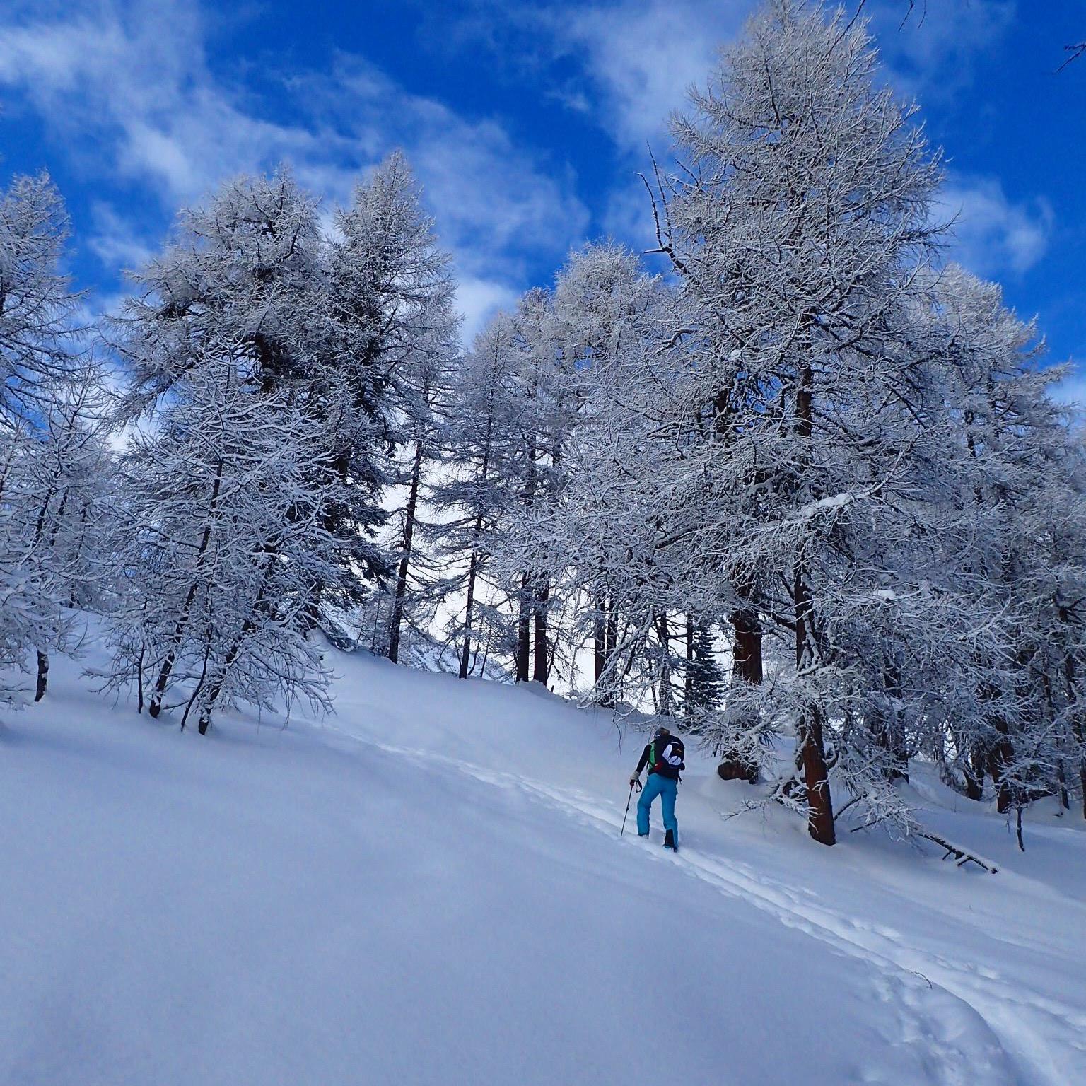Schnee- und Lawinenkunde
